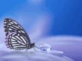 Description : Naturopathe et soins énergétiques