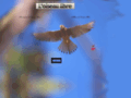 Détails : L'oiseau libre