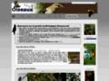 Détails : Les oiseaux