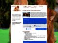 Détails : Spitz nain | Toutes les informations