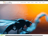 photography, soil, fauna, collembola, springtails, arthropods