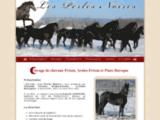 Vente de Frison et Arabo Frison - Elevage de Chevaux Les Perles Noires