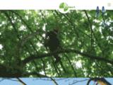 Belbéoc'h - Le spécialiste de l'arbre : élagage, abattage, soins des arbres