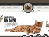 Le chat bengal est un chat aux allures de leopard - Elevage de chat bengal - Bengals fr