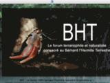 BHT : Bernard l'hermites terrestres, Coenobita, Pagoux. :: La connaissance, les soins et l'entretien de vos Bernard l'hermites terrestres, Coenobita, Pagoux.