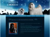 Élevage sélectif de Bichons Maltais, Éleveur : Bichons Snowbelle