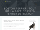 Boston Terrier : Informations sur le Terrier de Boston