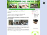 Bouddha de Jade, Restauration rapide à consommer sur place ou à emporter et épicerie asiatique