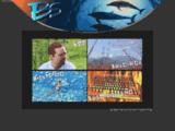 B.S. Prestations informatique et internet