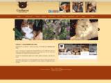 CatLove - L'Amour des Chats