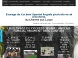 Cockers Anglais élevage de chiens Loir et Cher Dhuizon 41