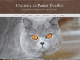 Elevage de chats British Shorthair