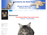 Chatterie Maine Coon - Chatterie de Saint Paul - élevage de chat - Maine Coon HCM KDP