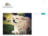 Assurance maladie, complémentaire, mutuelle santé animal (chien et chat), comparateur : Chien Chat Santé
