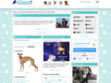 ChiensDeRace.com est le site reference du chien et races de chien (berger,terrier,teckel,epagneul)