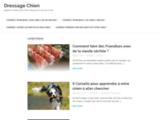 Chiens dressage | Vous pouvez dresser votre chien en moins de 15 minutes par jour