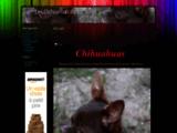Les Chihuahuas du Var