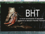{BHT : Bernard l'hermites terrestres, Pagoux, Coenobita}