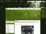 Elevage de la Tsaparang Valley - eleveur de chiens Dogue du Tibet