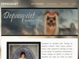 Depasquiet - Yorkshire Terrier