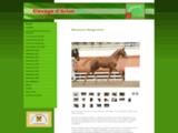Elevage de chevaux de dressage