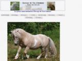 Elevage de poneys shetland et poneys mini shetland, Bienvenue à l'élevage de La Fontaine