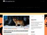 Offres découvertes et coupons en Belgique