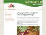 Harpagophytum, soulager les douleurs articulaires
