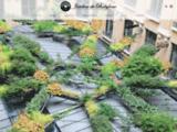 Mur végétal - Design vegetal