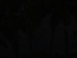 Le gite du Domaine Karaibes, Bungalow Guadeloupe, Gite Guadeloupe, Location bungalow Guadeloupe ? Deshaies