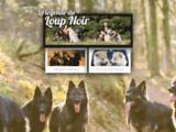 La légende du loup noir - Berger allemand poil long ancien type