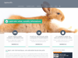 Lapin nain, achat, informations, conseils, guide sur le lapin domestique
