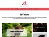 Caniche : portrait, caractère, qualités | LeCaniche.fr