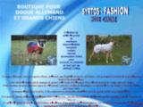 Manteau et impermeable pour dogue allemand et toute race de grand chien