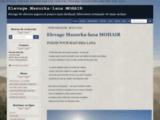 Mazurka-lana elevage de chevres angora et poneys mini shetland