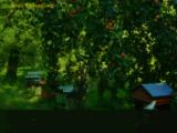 Miel artisanal et produits de la ruche, miel en direct de l'Apiculteur