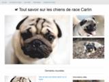 Mon Carlin - Site d'information sur le chien et chiot carlin