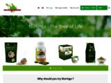 Moringa : tout savoir sur l'arbre de vie