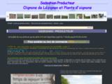 Oignons de Lézignan  et plants d'oignons