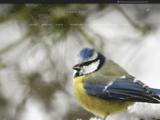 Oiseaux de France : la passion de l'ornithologie et de la photographie
