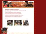 Élevage sélectif de Yorkshire Terrier, Éleveur : Passion-Yorkie