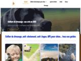 Comparatifs et guides d'achat de produits canins