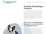 Scarlett, Bouledogue Français