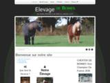 Elevage de Bennes / Poneys Shetland