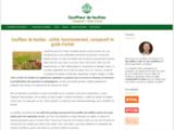 Souffleur de feuilles : utilité, fonctionnement, comparatif et guide d'achat