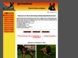Sportmalinois eleveur de berger belge malinois belgique - l'elevage