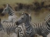 Safari Tanzanie : Votre safari organisé par Tanganyika réceptif en Tanzanie