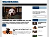 Accessoires chien, chat, tendance et design - Tendances et animaux