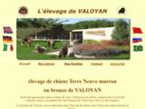 élevage de valoyan terre neuve marron ou bronze