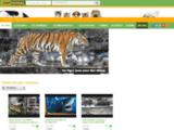 Visionnez des millions de vidéos d'animaux sur ZapAnimal ! Retrouvez tous vos animaux favoris : chats, chiens, chevaux, rongeurs, oiseaux, reptiles, poissons, requins, félins et bien d'autres encore...